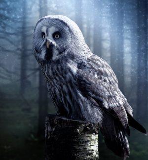 owl-1727370_1280